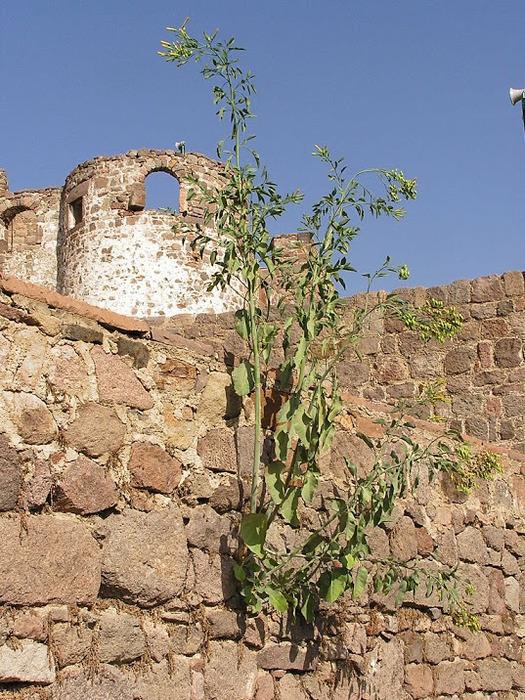 Остров Лесбос - Остров одетый в зелень сосен, оливковых деревьев и дубов. Часть 1 50030