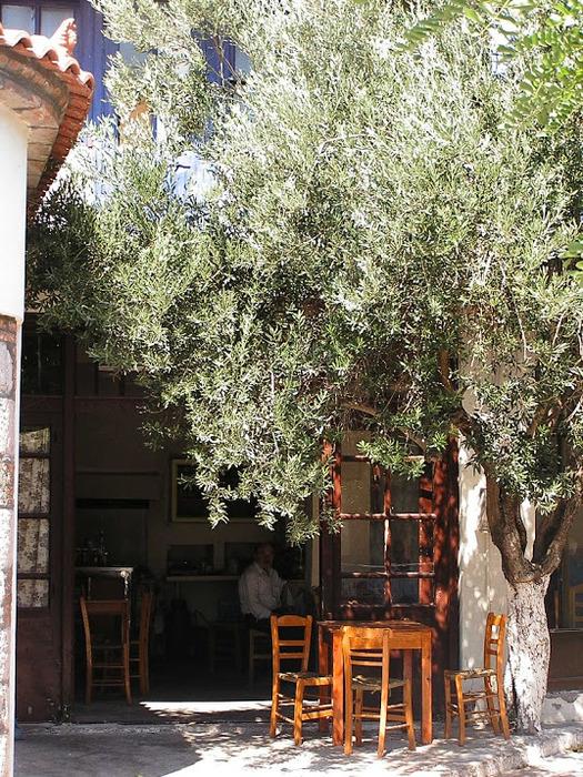 Остров Лесбос - Остров одетый в зелень сосен, оливковых деревьев и дубов. Часть 1 50266