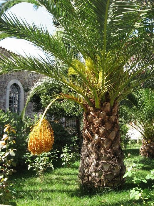 Остров Лесбос - Остров одетый в зелень сосен, оливковых деревьев и дубов. Часть 1 76258