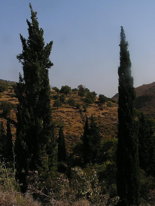 Остров Лесбос - Остров одетый в зелень сосен, оливковых деревьев и дубов. Часть 1 33318