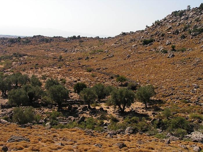Остров Лесбос - Остров одетый в зелень сосен, оливковых деревьев и дубов. Часть 1 79255