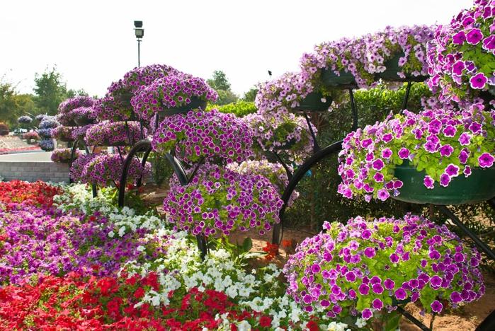 Парк цветов Al Ain Paradis.