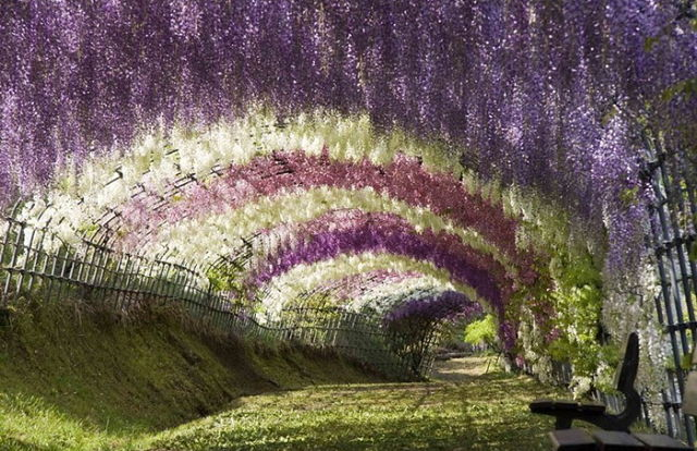 Японский Парк цветов Асикага (640x414, 90Kb)