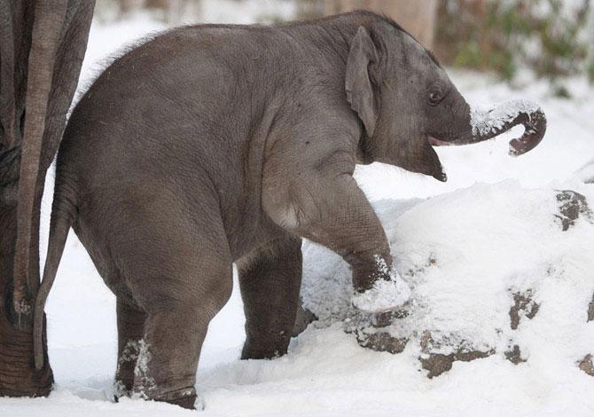 смешной слоненок фото 4 (670x470, 68Kb)