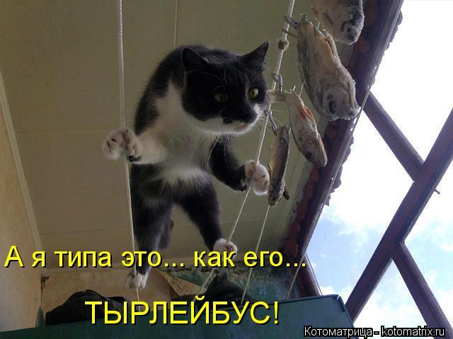 kotomatritsa_5 (640x480, 42Kb)