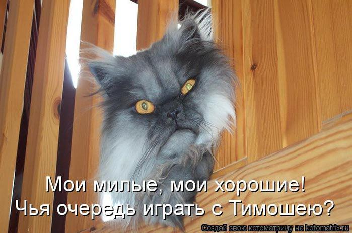 kotomatritsa_da (700x463, 55Kb)
