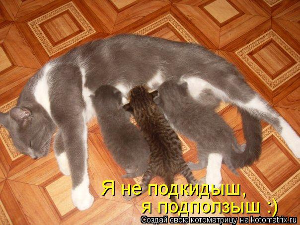 kotomatritsa_F (604x453, 60Kb)