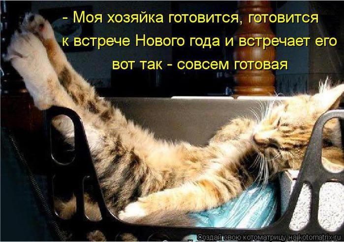 kotomatritsa_nx (700x492, 71Kb)