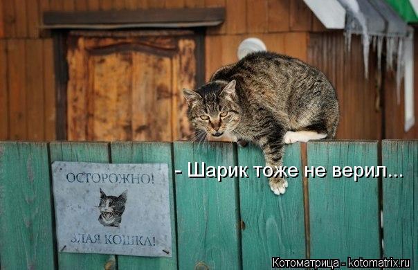 kotomatritsa_shp (604x390, 44Kb)