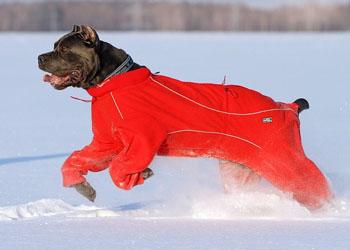Прогулки с собакой зимой (350x250, 36Kb)