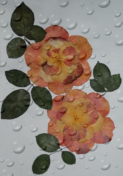 Поделки из сухих лепестков розы 49