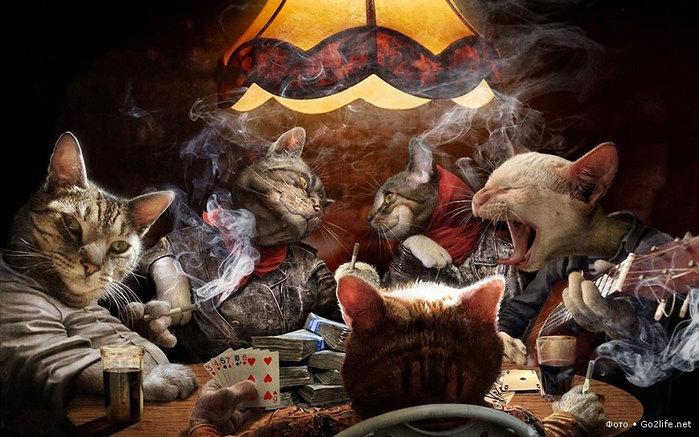 распутные коты (700x437, 100Kb)