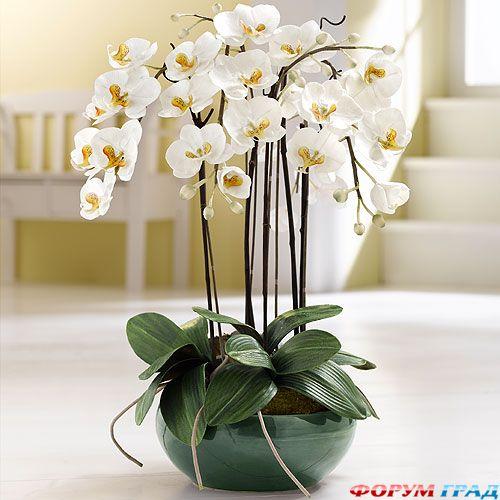 Орхидея в интерьере фото
