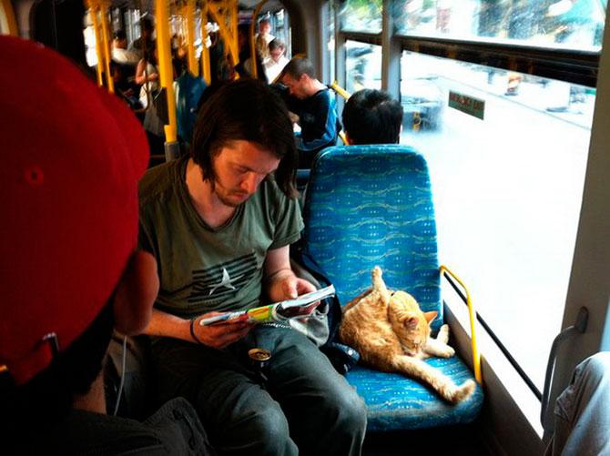Сек рассказы с котом 23 фотография