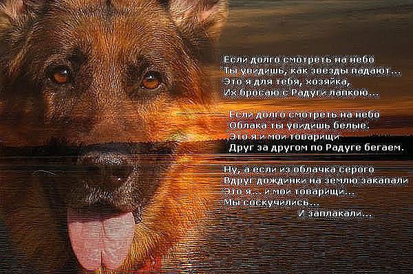 Статус про собаку которая умирает