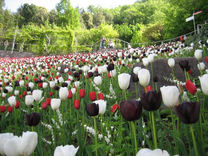 Сады замка Траутмансдорф 50481