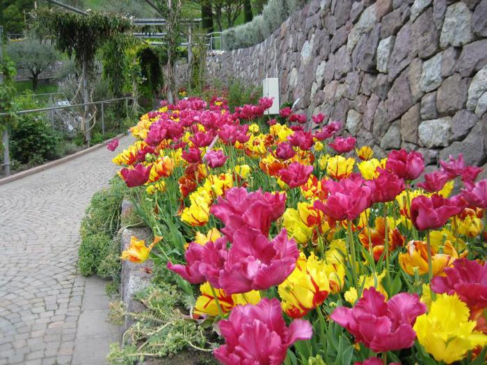 Сады замка Траутмансдорф 73316