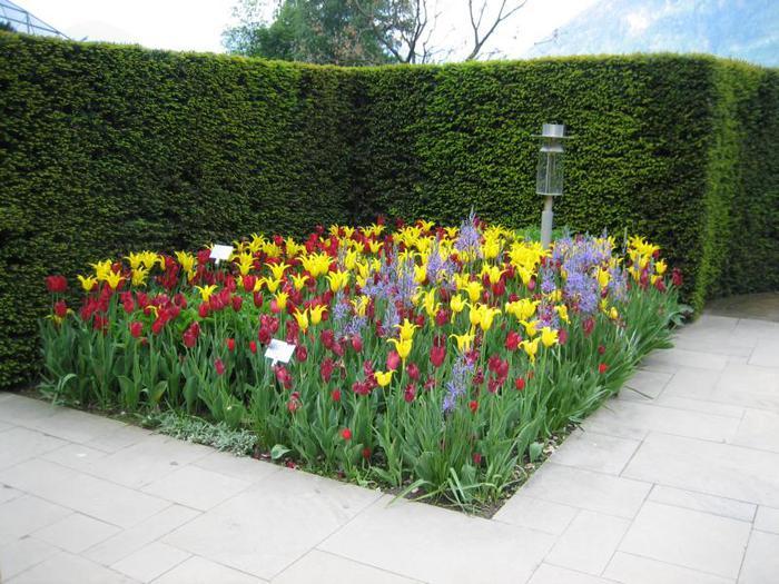 Сады замка Траутмансдорф 39402
