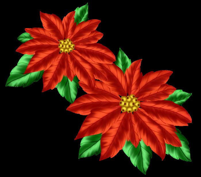 PPS_Poinsettias (700x616, 352Kb)