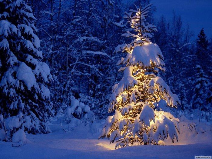 Merry-Christmas-christmas-9427475-1600-1200 (700x525, 99Kb)