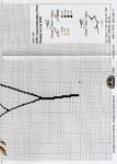 Превью DMC Linen Thread Plants8 (500x700, 293Kb)