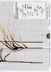 Превью DMC Linen Thread Plants10 (501x700, 310Kb)