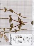 Превью DMC Linen Thread Plants12 (518x700, 343Kb)