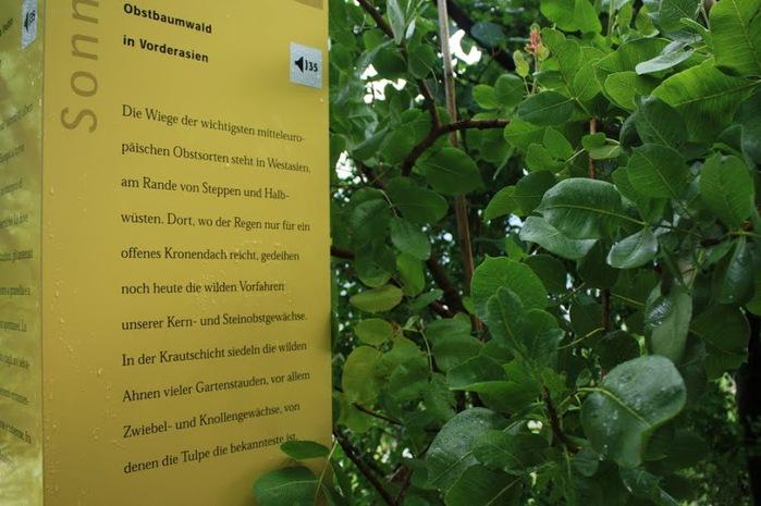 Сады замка Траутмансдорф 52946
