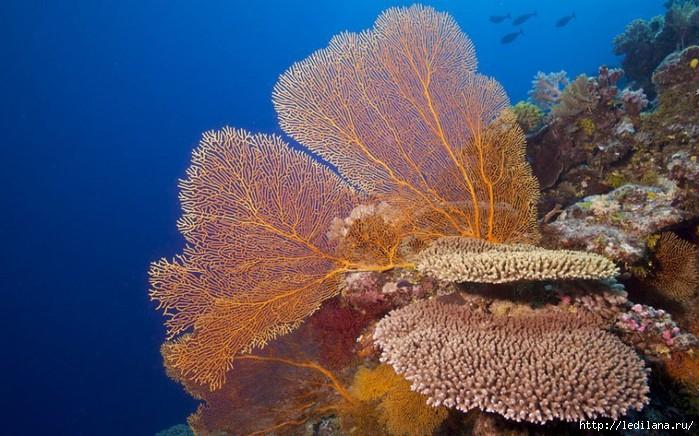 подводный мир (700x436, 229Kb)