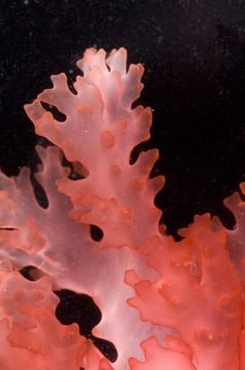 подводный мир31 (273x411, 23Kb)