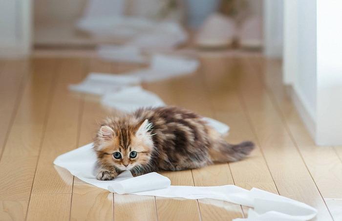 Daisy_kitten_3 (700x452, 59Kb)