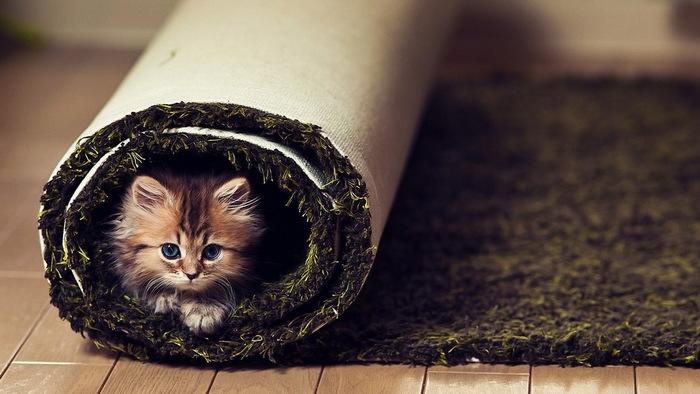 Daisy_kitten_11 (700x394, 92Kb)