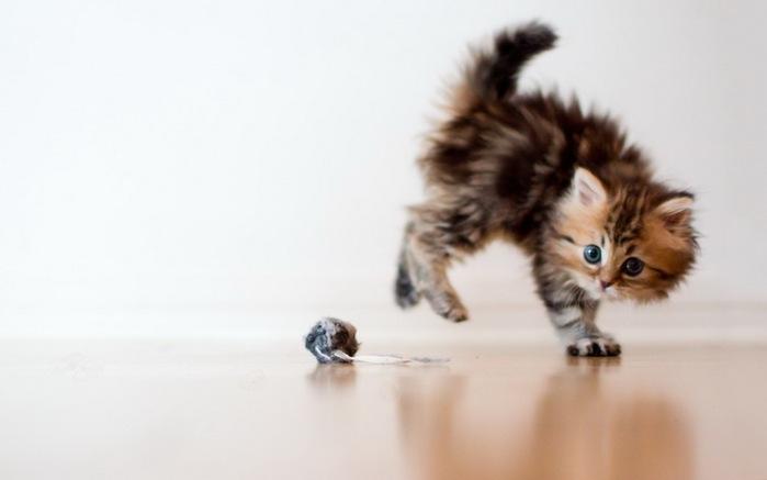 Daisy_kitten_9 (700x437, 40Kb)