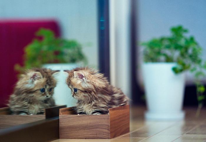 Daisy_kitten_13 (700x481, 76Kb)