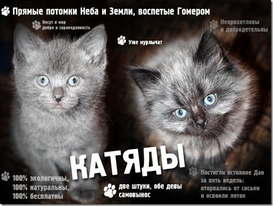 котятки (541x407, 77Kb)