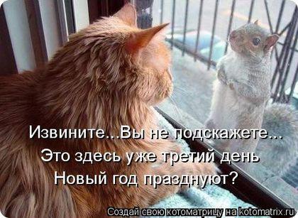 Кошки в Старый Новый год