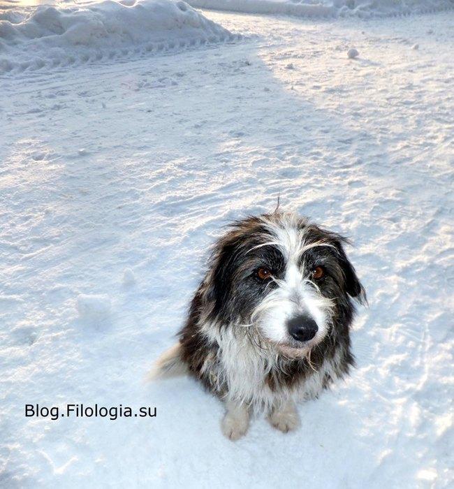 Собака на снегу. Фото/3241858_dog03 (650x700, 94Kb)