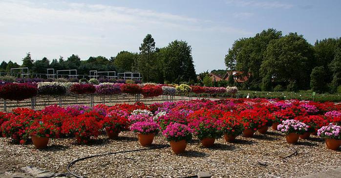 Бад Цвишенан : Park der Garten 69533