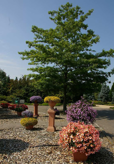 Бад Цвишенан : Park der Garten 14097