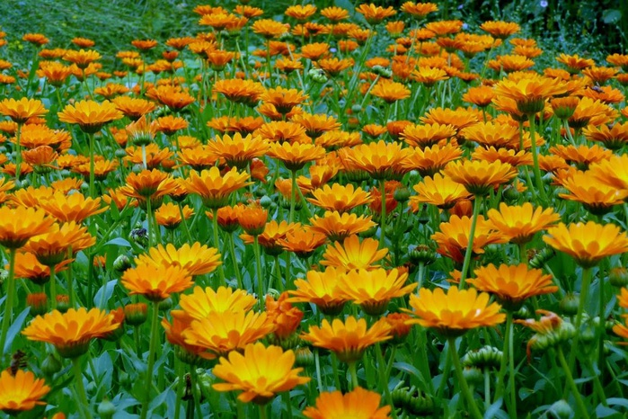 Бад Цвишенан : Park der Garten 41565