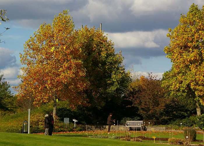 Бад Цвишенан : Park der Garten 37742