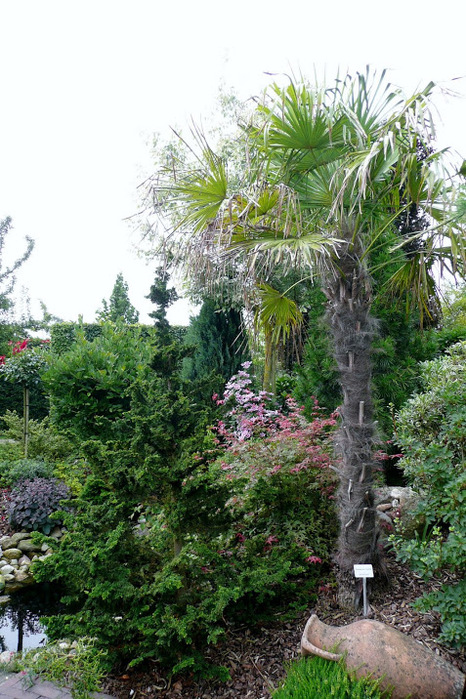 Бад Цвишенан : Park der Garten 14922
