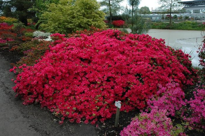 Бад Цвишенан : Park der Garten 60893