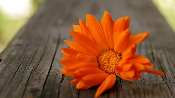 flowers69 (700x393, 189Kb)