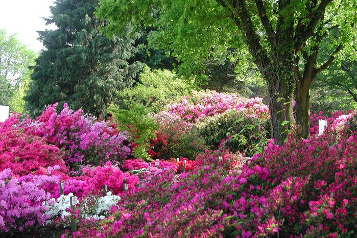 Бад Цвишенан : Park der Garten 80456