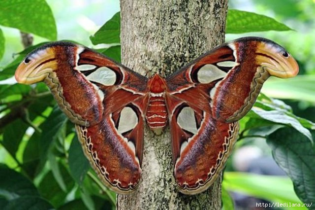 бабочка13 (640x426, 170Kb)