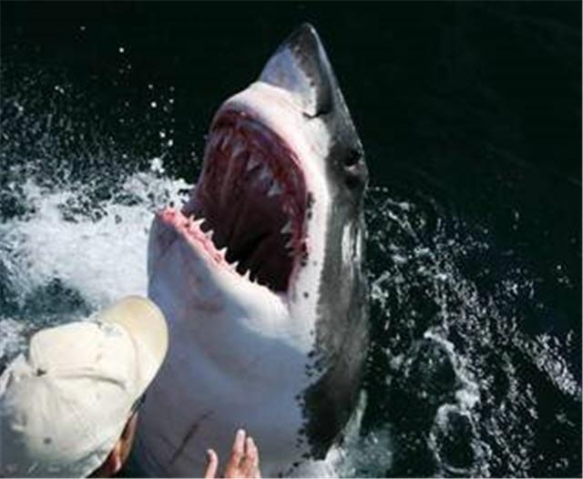 человек и акула 4 (640x526, 46Kb)