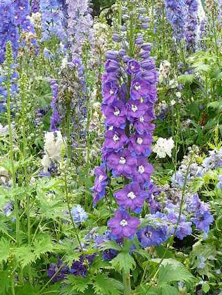 вышивка лентами-мастер класс-цветы (320x425, 79Kb)