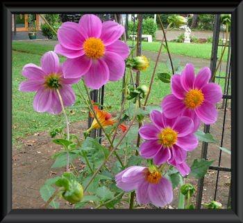 вышивка лентами-мастер класс-цветы (350x320, 42Kb)