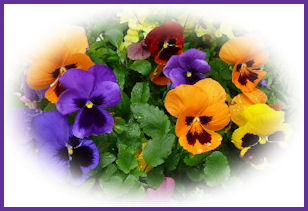 вышивка лентами-мастер класс-цветы (308x211, 27Kb)